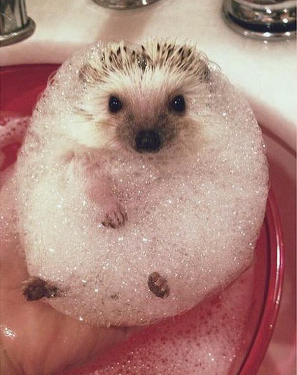 animais-tomando-banho_1
