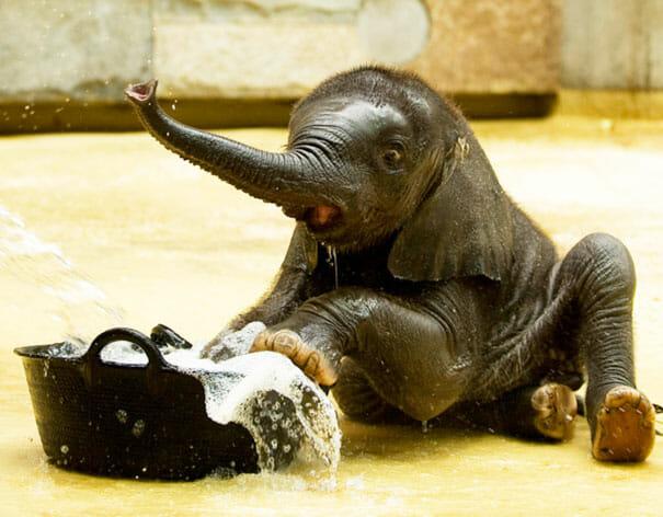 animais-tomando-banho_10