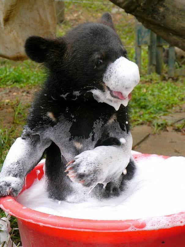 animais-tomando-banho_2
