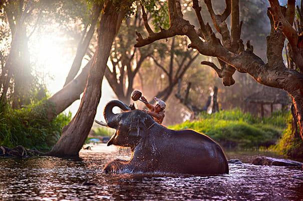 animais-tomando-banho_6