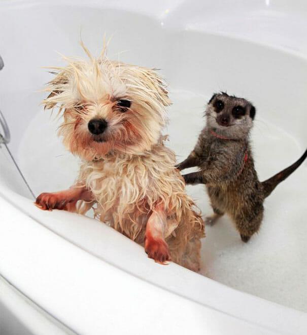 animais-tomando-banho_7