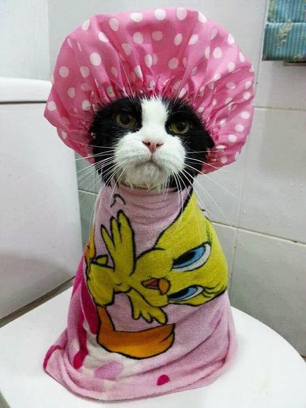 animais-tomando-banho_8
