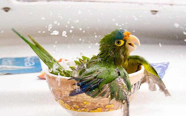 animais-tomando-banho_9