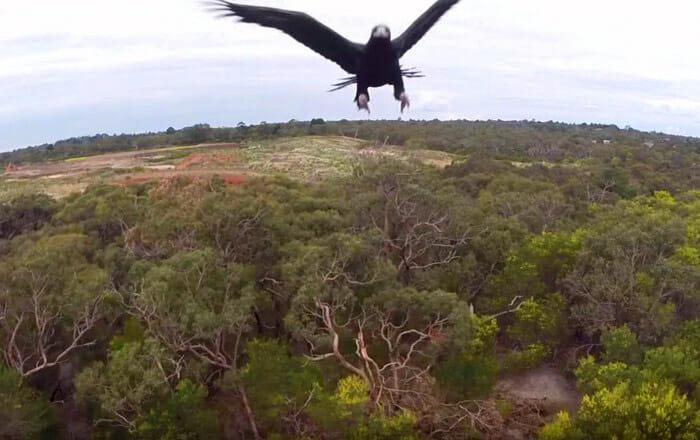 aguia-vs.drone