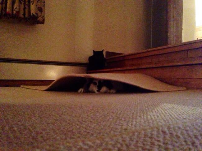 animais-brincando-esconde-esconde_13