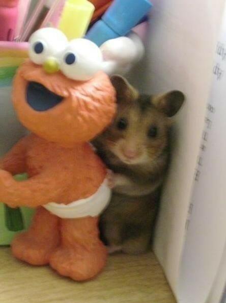 animais-brincando-esconde-esconde_16