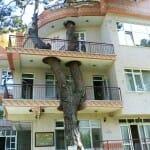 14 Casas e edifícios criativos que foram construídos sem danificar árvores locais