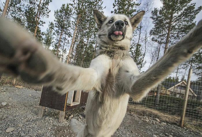 cachorros-fazendo-selfie_2