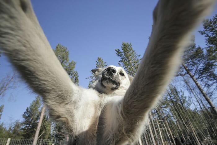 cachorros-fazendo-selfie_4