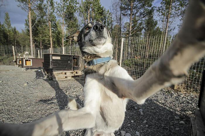 cachorros-fazendo-selfie_6