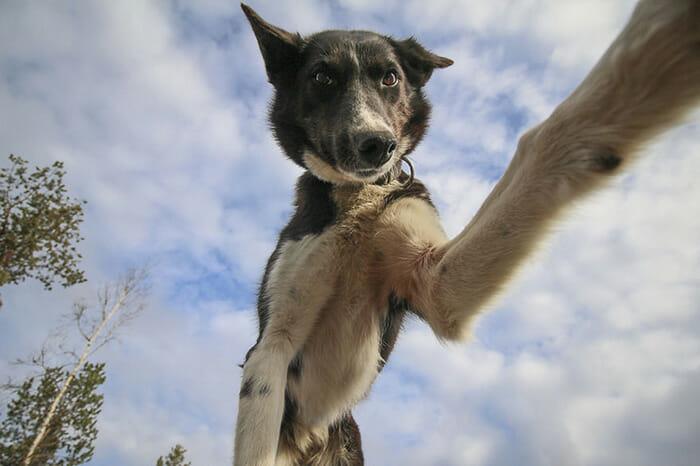 cachorros-fazendo-selfie_8