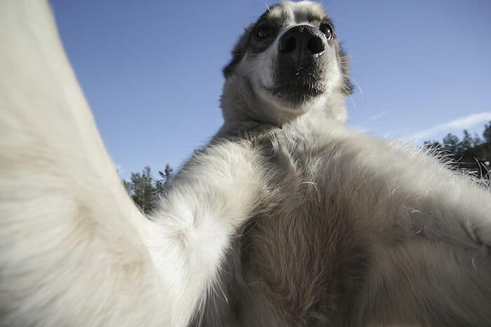 cachorros-fazendo-selfie_9