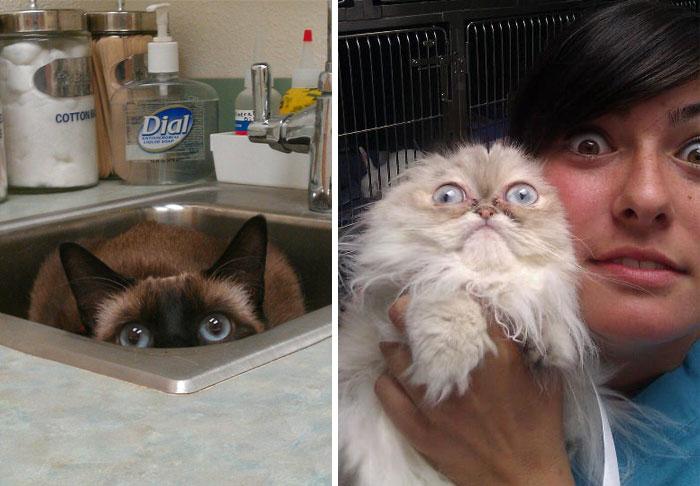 gatos-que-odeiam-veterinario