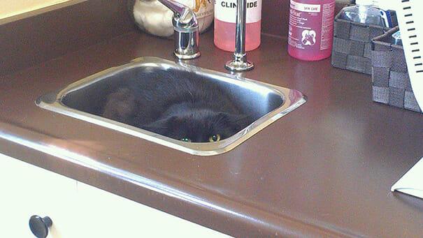 gatos-que-odeiam-veterinario_1