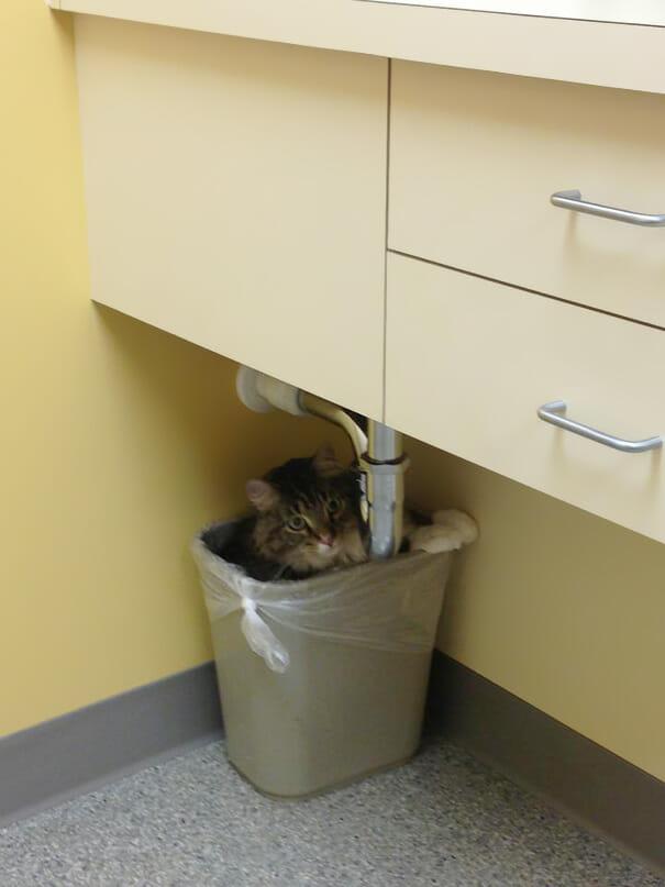 gatos-que-odeiam-veterinario_13
