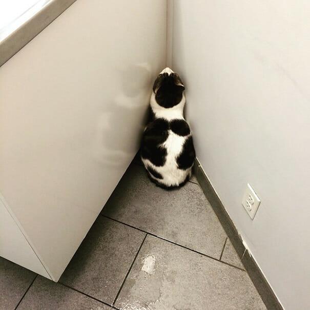 gatos-que-odeiam-veterinario_18