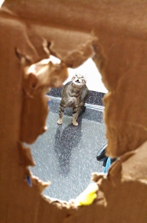 gatos-que-odeiam-veterinario_20