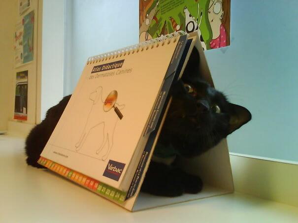 gatos-que-odeiam-veterinario_21