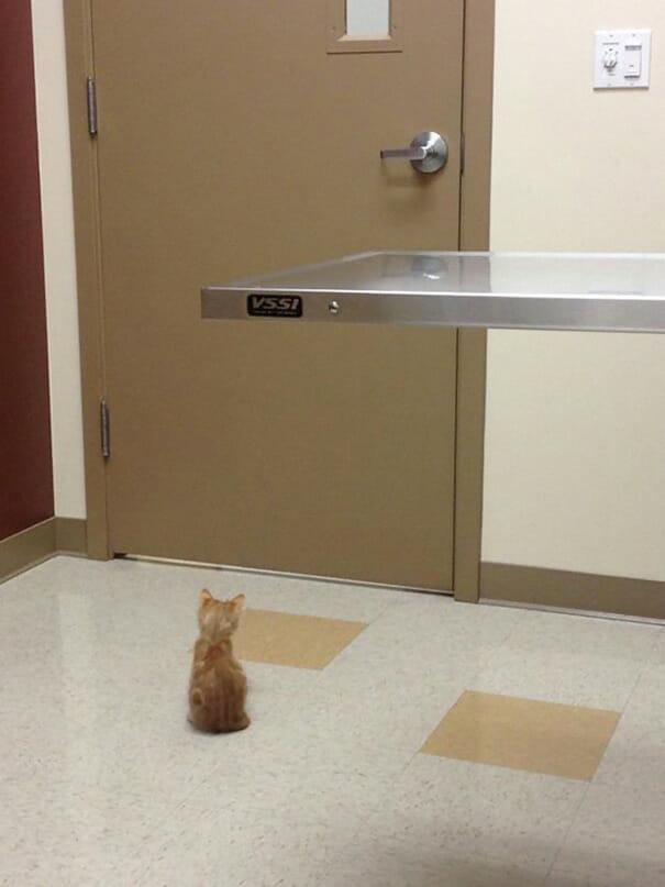 gatos-que-odeiam-veterinario_3
