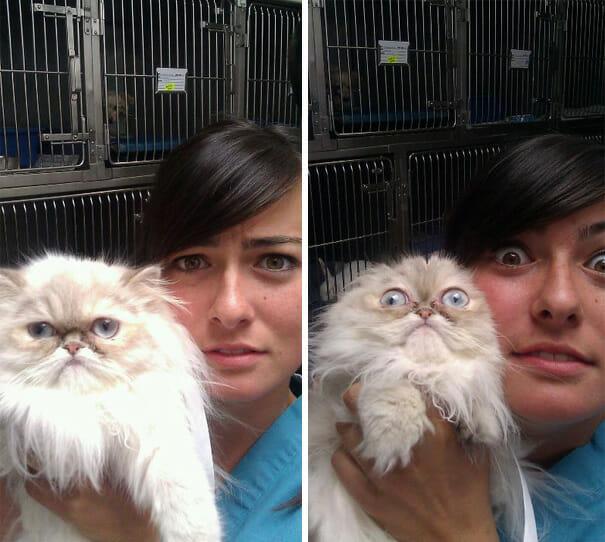 gatos-que-odeiam-veterinario_5