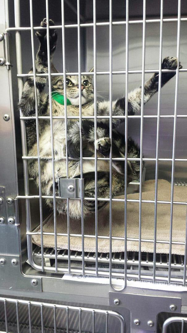 gatos-que-odeiam-veterinario_9