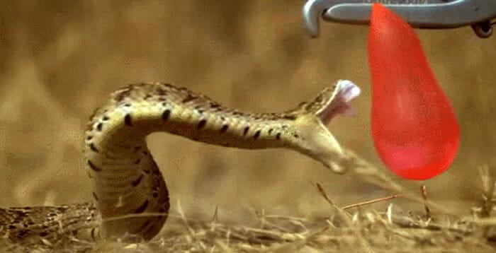 gifs-animais-camera-lenta
