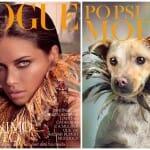 Campanha de adoção inusitada coloca cães de rua em capas de revistas famosas