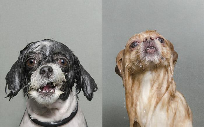 foto-cachorro-molhado