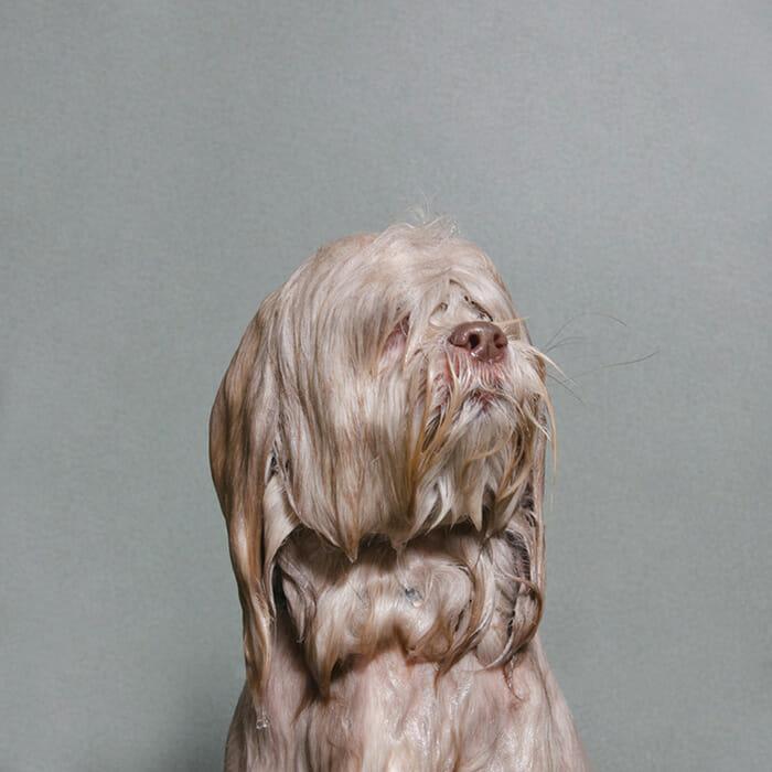 foto-cachorro-molhado_11