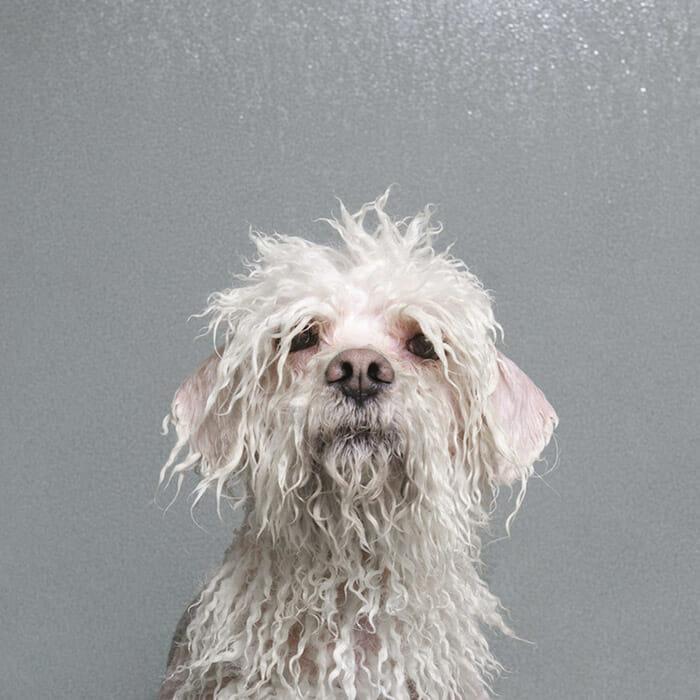 foto-cachorro-molhado_12