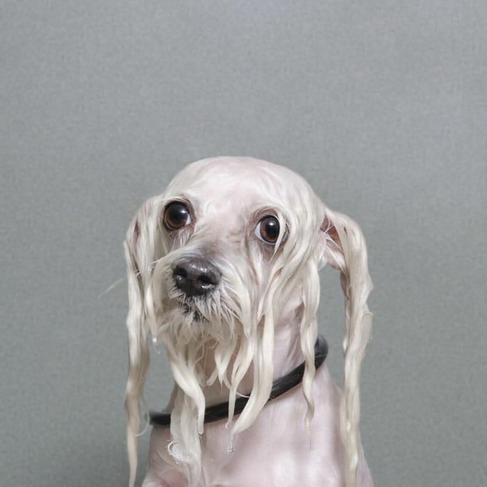 foto-cachorro-molhado_14