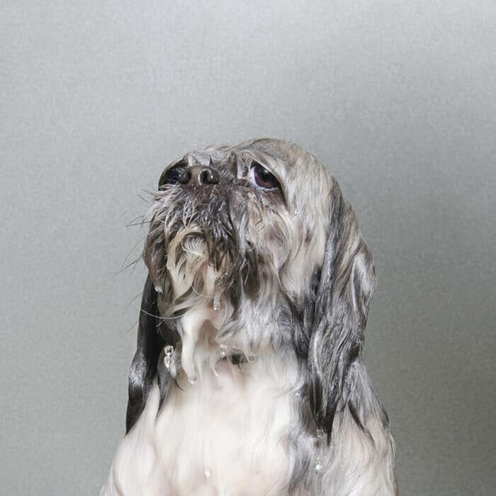 foto-cachorro-molhado_15