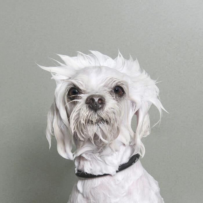 foto-cachorro-molhado_16