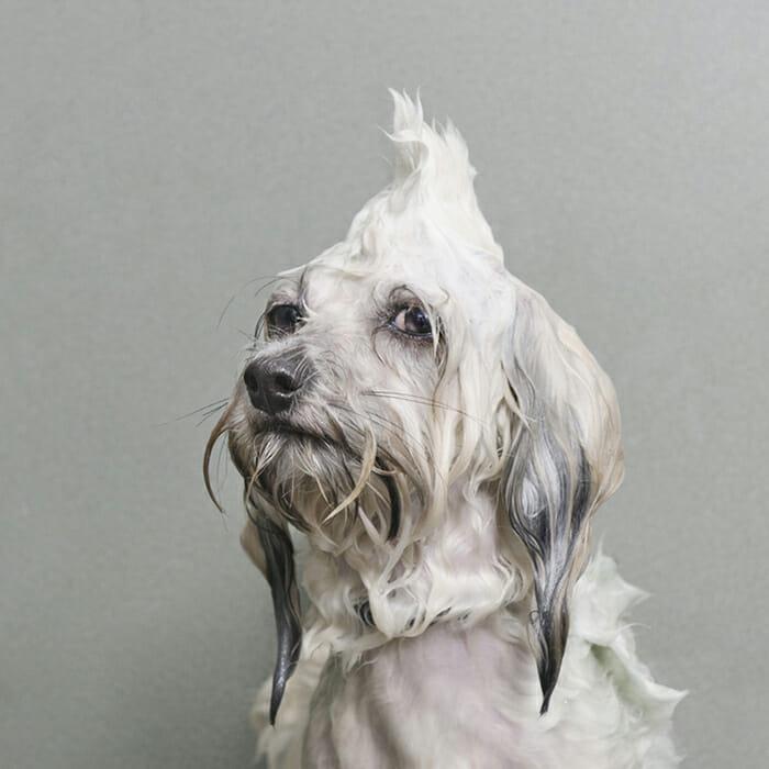 foto-cachorro-molhado_2