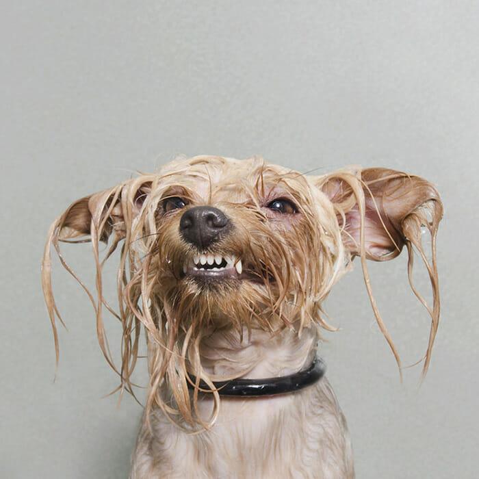 foto-cachorro-molhado_3