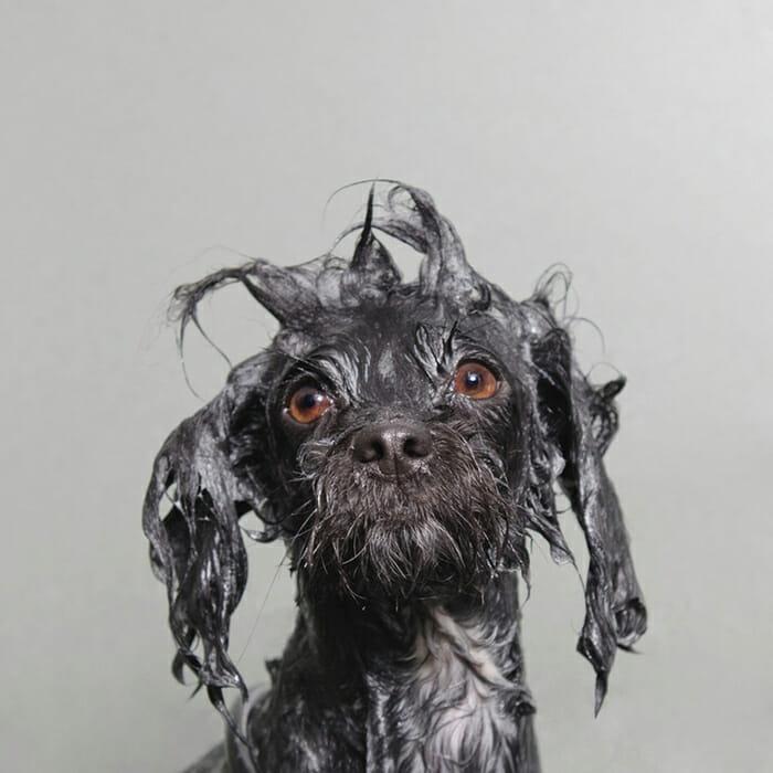 foto-cachorro-molhado_4