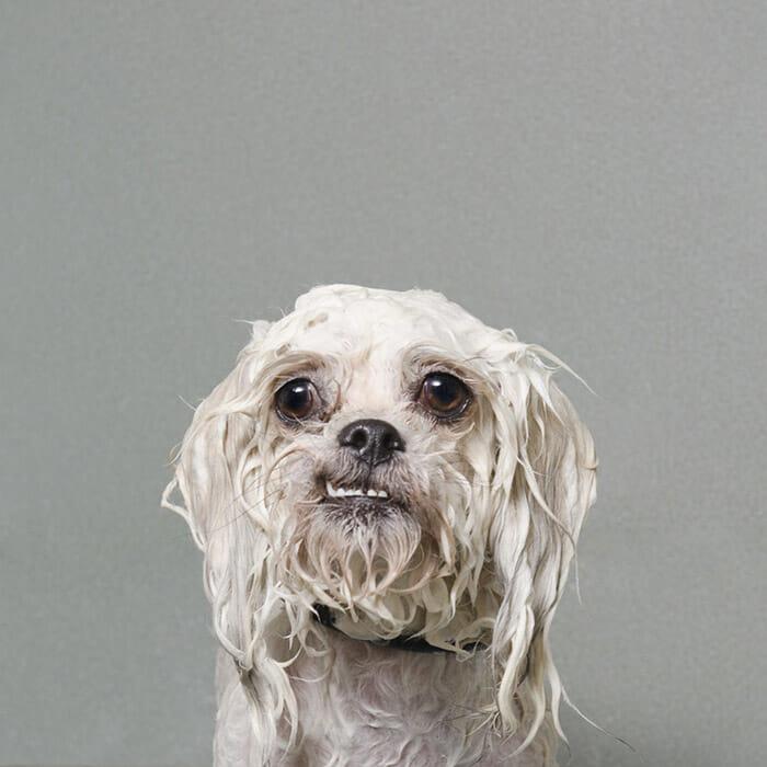 foto-cachorro-molhado_7