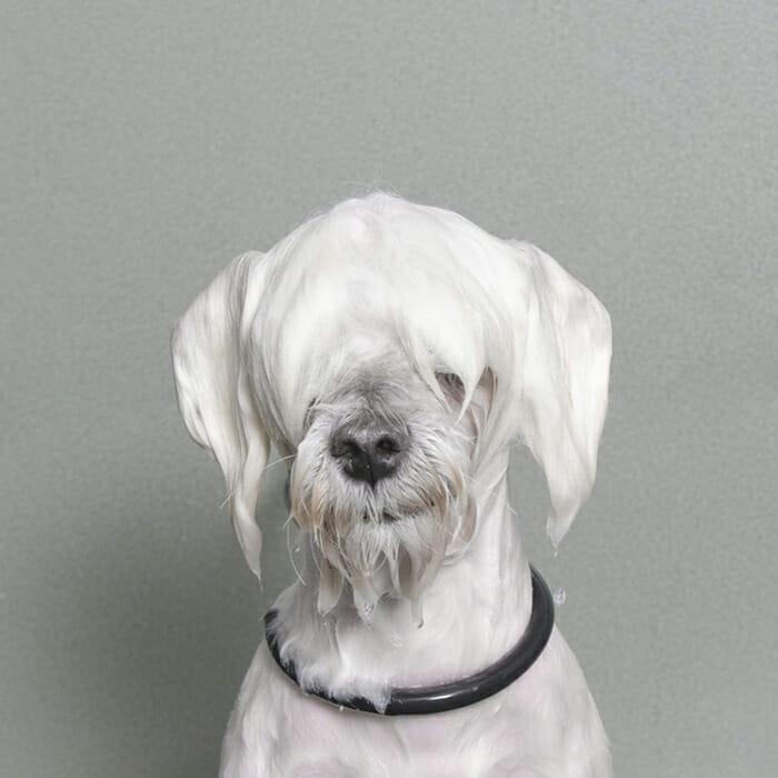 foto-cachorro-molhado_8