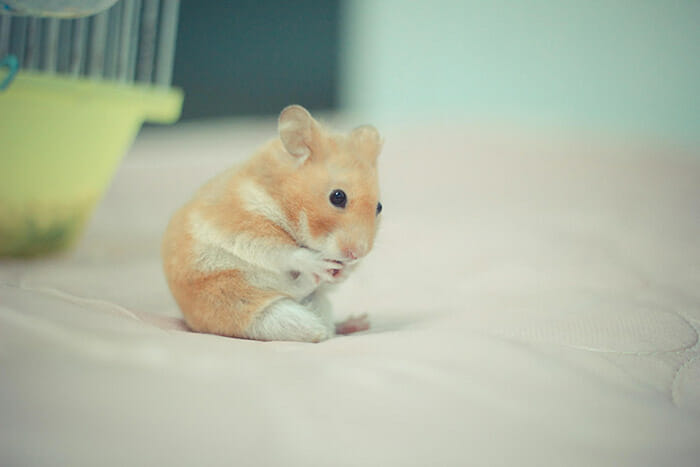 hamsters-fofos_14