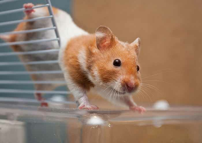 hamsters-fofos_32