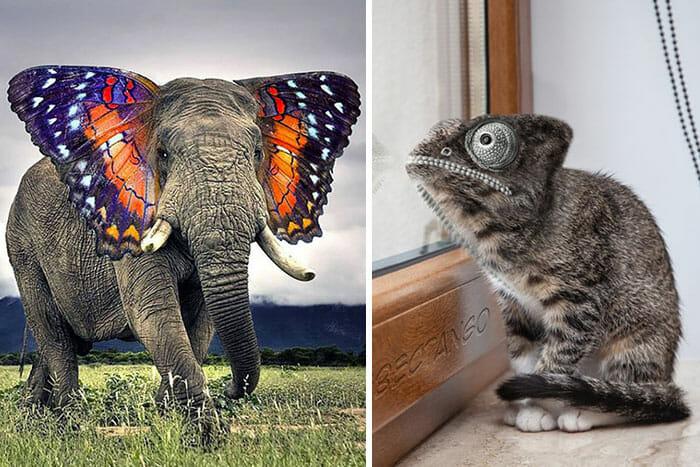 animais-hibridos