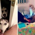 46 Cachorros que não estão nem aí para o espaço ou privacidade dos outros