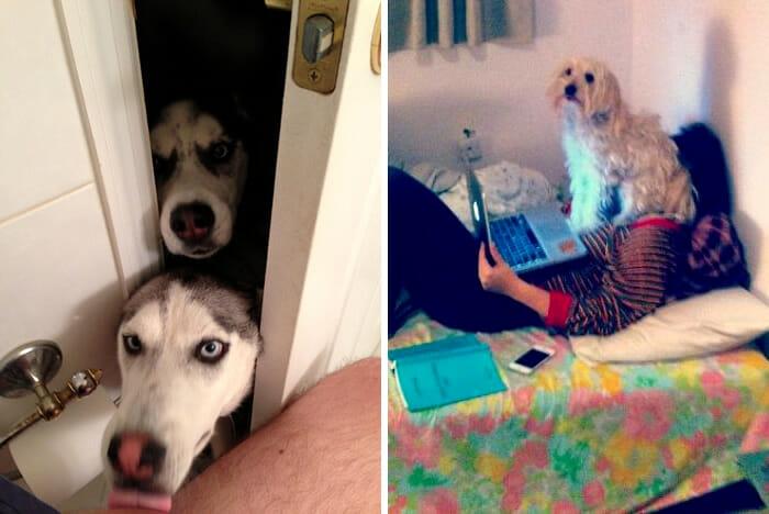 cachorros-folgados