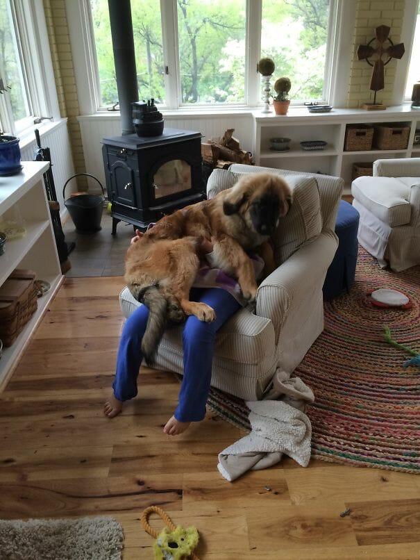 cachorros-folgados_19