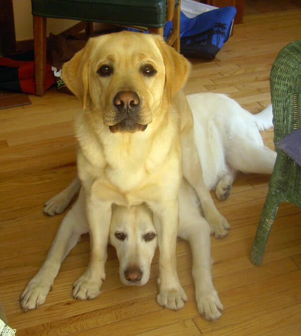 cachorros-folgados_23