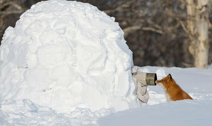 FOTO: Reprodução/animalworld.com.ua