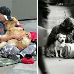 45 Imagens que provam que os cachorros são leais, mesmo quando estamos na miséria