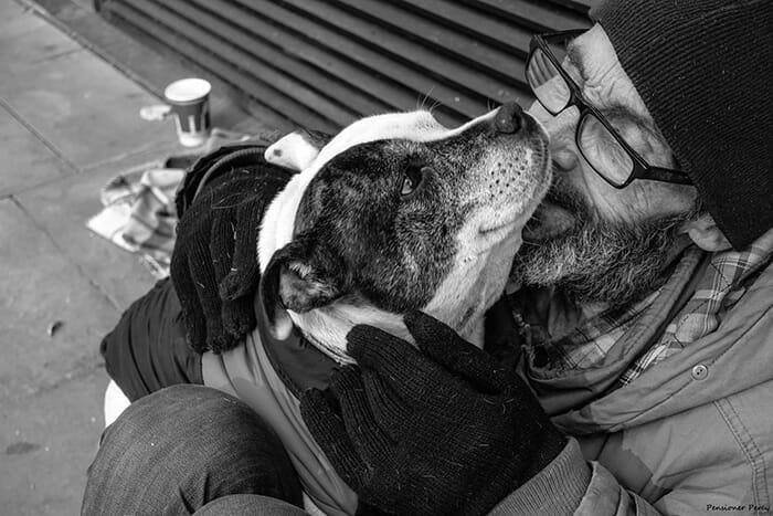 cachorro-fiel_17