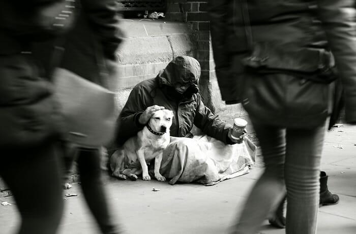 cachorro-fiel_26