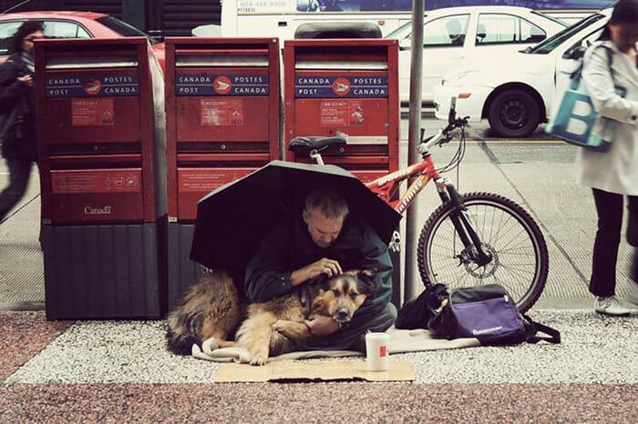 cachorro-fiel_4